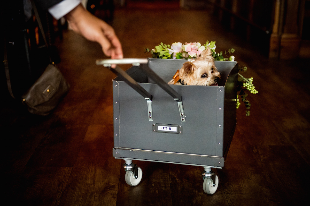 Ted_the_yorkie_in_wagon.jpg