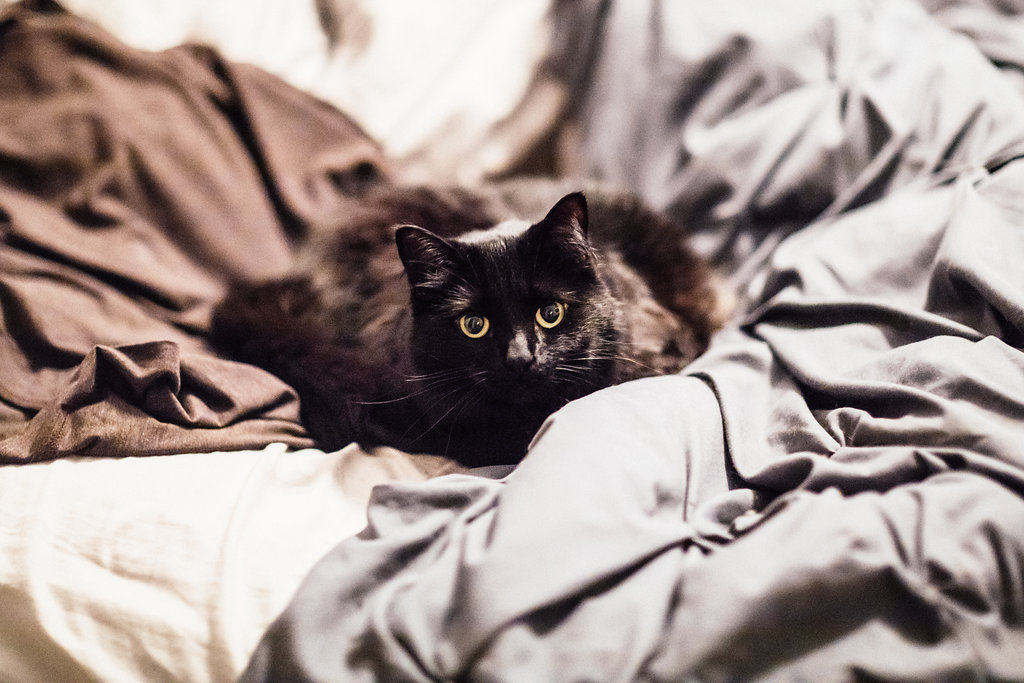 black_cat_sitting_on_tan_gray_bed_engagement_photos.jpg
