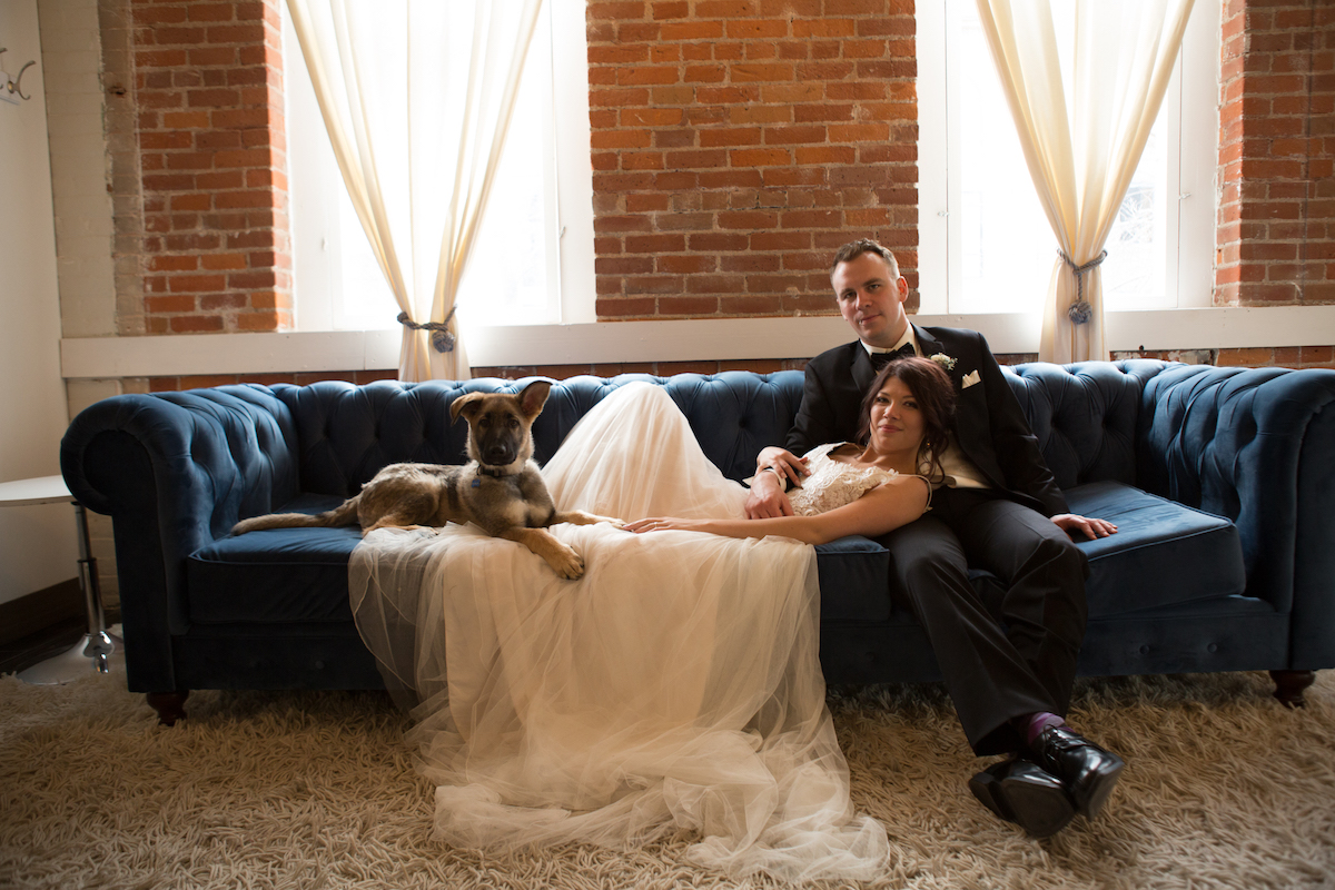 bride_and_groom_on_navy_felt_couch_with_german_shepard_puppy.jpg
