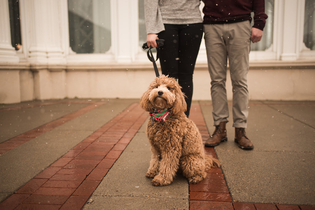couple_holding_leash_goldendoodle_outside_snowing.JPG