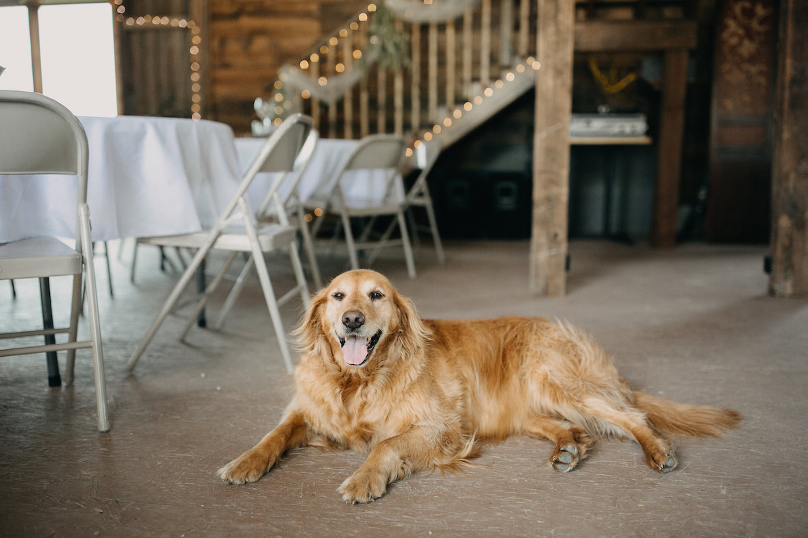 dog-near-wedding-tables.jpg