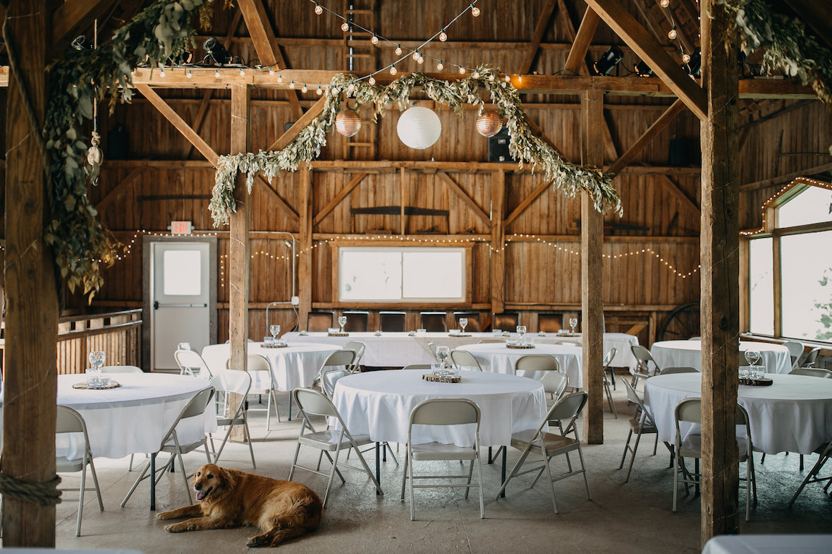 dog-with_wedding-tables-and-garland.jpg