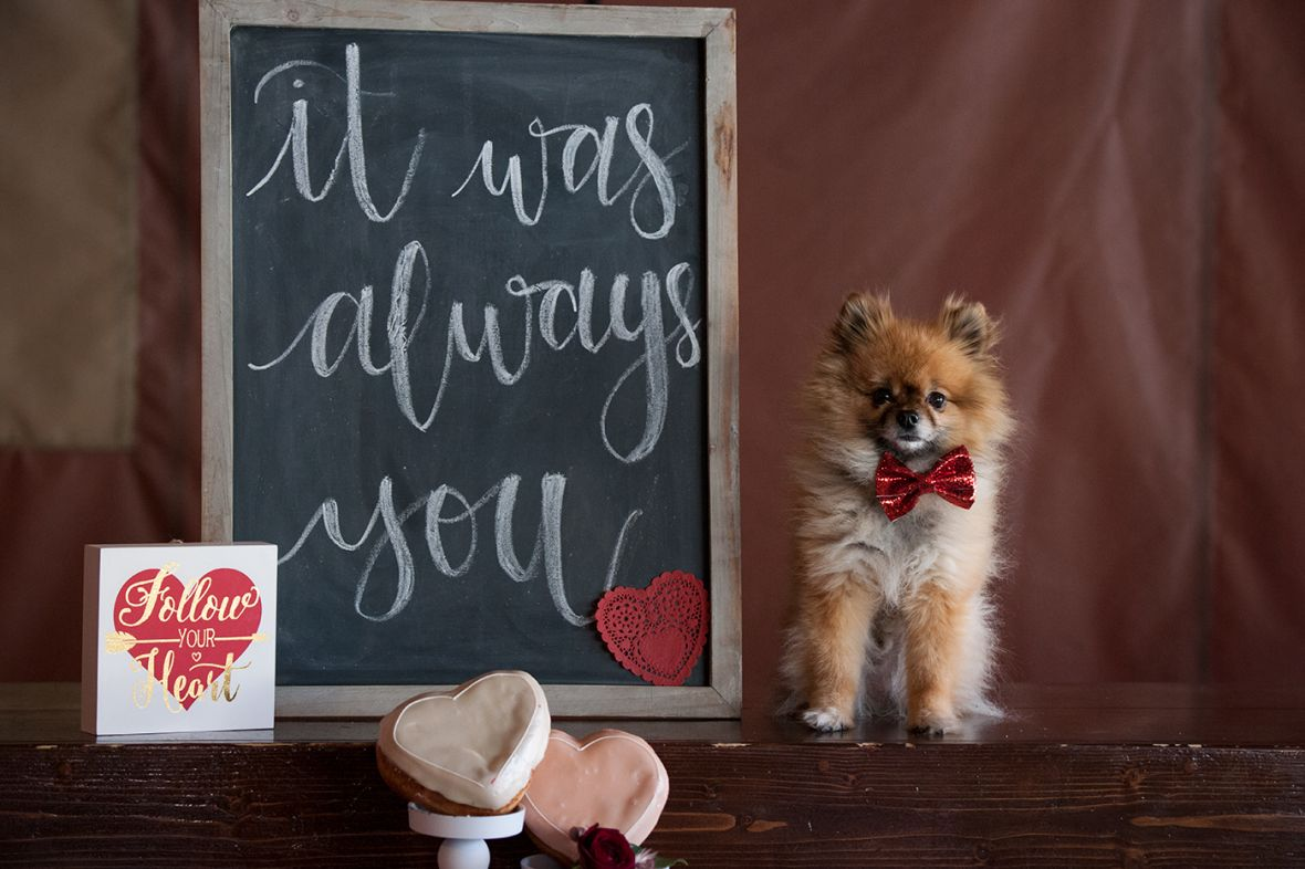 dog_in_red_bow_tie_it_was_always_you_chalkboard_sign.jpg