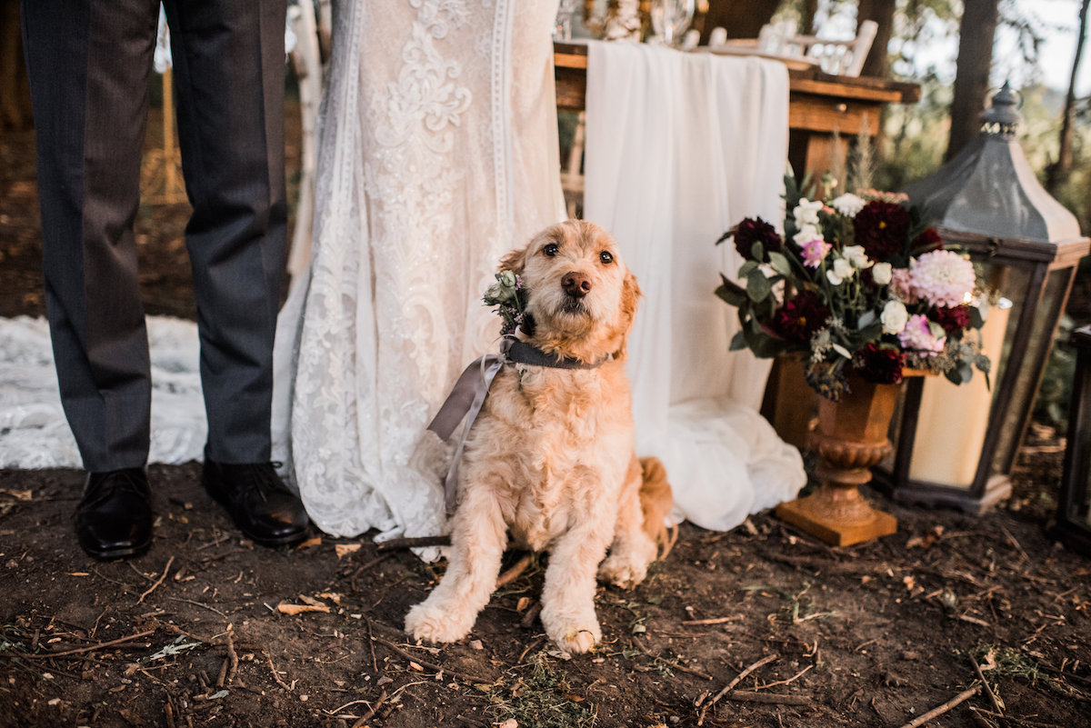 golden_doodle-puppy_at_wedding_styled_shoot_with_flowers.jpg