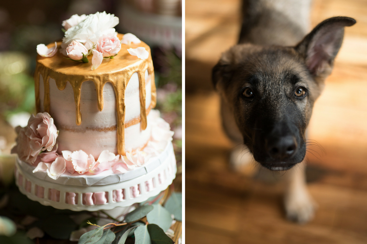 naked_icing_cake_pink_flowers_gold_dripping_icing_german_shepard_puppy.jpg