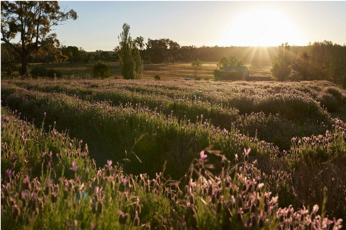 sunrise_over_field_of_purple_wild_flowers.jpg